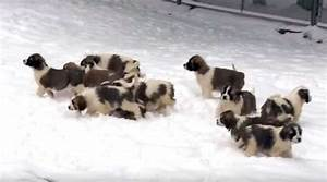 Russian military shares puppy videoLatest Commentary Today ...