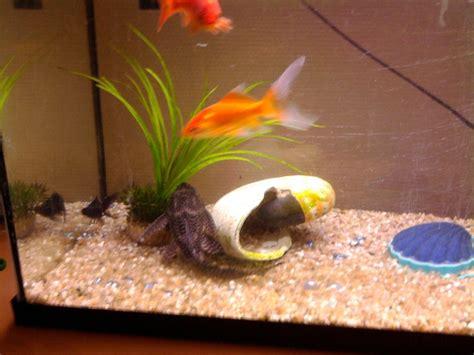 poisson dans un aquarium le poisson