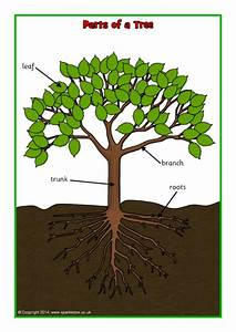 Parts Of A Tree Poster  Worksheet  Sb10351