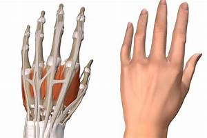 Von Hand Kreuzworträtsel : tiktaalik flosse beweis f r die evolution re entwicklung der hand die welt ~ Eleganceandgraceweddings.com Haus und Dekorationen