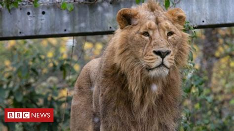 Bristol Zoo to leave Clifton site after 185 years - BBC News