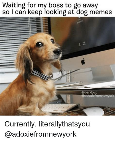 Go Away Meme - waiting for my boss to go away so i can keep looking at dog memes iefromnewyork currently
