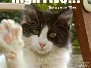 Katze Kotzt Viel : die katzen w nschen euch viel gl ck youtube ~ Frokenaadalensverden.com Haus und Dekorationen
