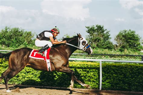 quinella horse racing bet pura sangre voucher ingles gift caballo kentucky derby know card chart downs betting churchill seating european
