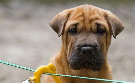 hundeschule hundetraining hundestunde berlinde