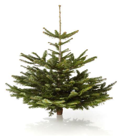 weihnachtsbaum nordmanntanne im greenbop online shop kaufen