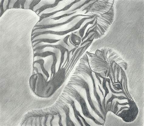 Baby Zebra Pencil Drawings
