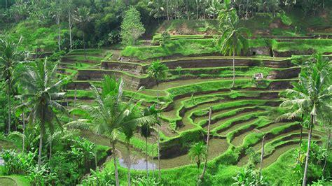 tegalalang rice terrace ubud  ubud  driver