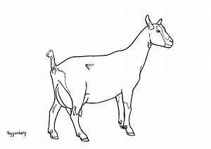 Dairy Goat Coloring Pages - grig3.org