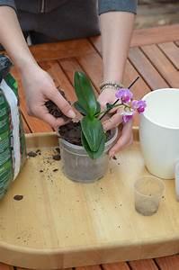 Orchideen Umtopfen Video : orchideen umtopfen so geht s richtig orchideen richtig ~ Watch28wear.com Haus und Dekorationen
