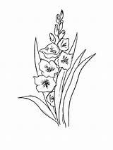 Gladiolus sketch template