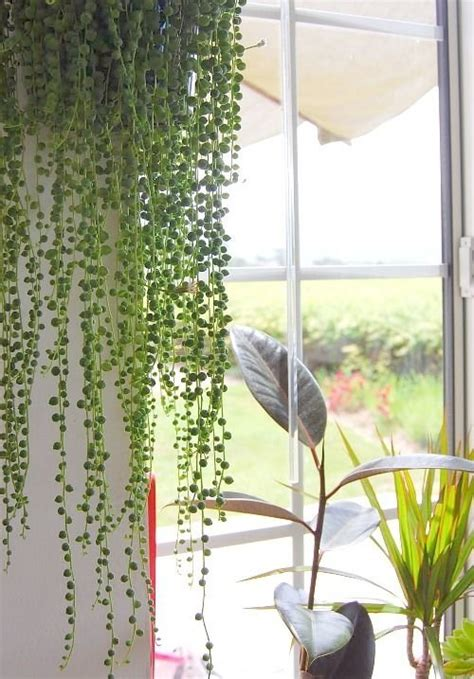 awesome indoor houseplants  brighten   home