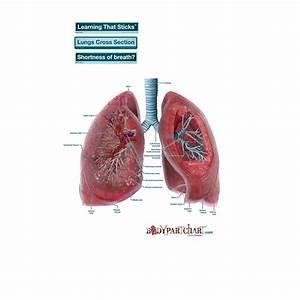 Lungs Cross