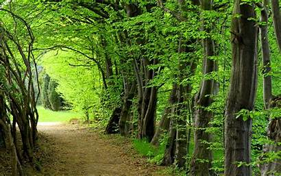 Desktop Trees Wallpapers Forest Nature Tree