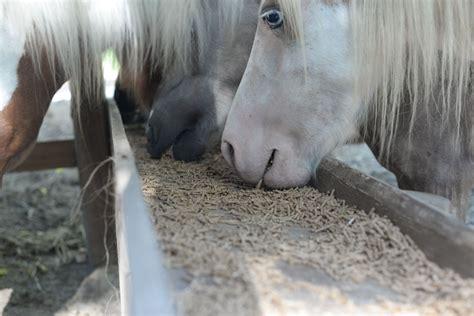 horse eating fast bolting too eats food horses stable