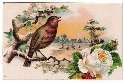 Bird Rose Postcard Graphic Robin Fairy Lovely