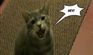 cat saying hey cat hq the worlds greatest cat