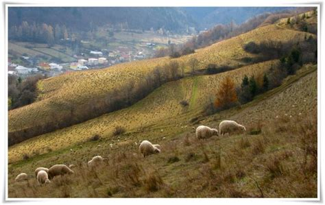 Fotografia: Ovce na Paši | fotky.sme.sk