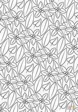 Coloring Pattern Pages Floral Printable Drawing Crafts sketch template