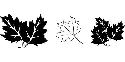 draw sheet   printable leaf stencils