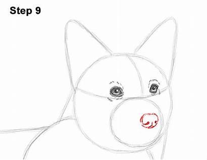 Corgi Draw Welsh Dog Drawing How2drawanimals Start