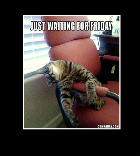 Pet Insurance Meme - pet insurance meme 28 images 403 best images about cute grumpy cat no on pinterest 1000