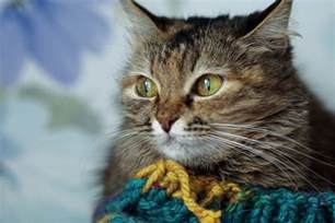 can cats get colds respiratory infection in cats