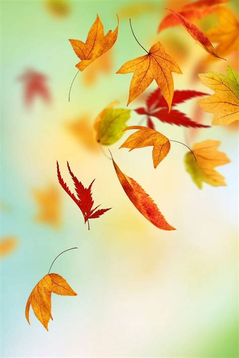 Falling Leaves Live Fall Backgrounds by Falling Leaves Wallpaper Jidileaf Co
