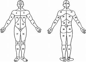 Body Map  Head  Area 1  2  23  Or 24   Neck  Area 3 Or 25