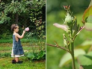 Algen Im Teich Hausmittel : l use auf rosen erste blattl use an rosen ~ Lizthompson.info Haus und Dekorationen