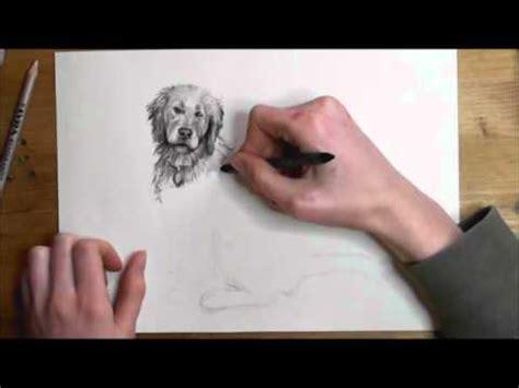 wie man hunde zeichnet video tutorial youtube