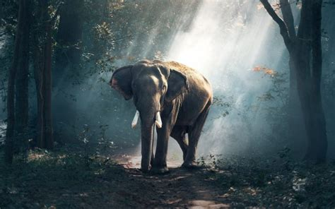 forest elephant  animals wallpapers  wallpaperx hd