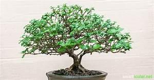 Zimmerpflanzen Für Schatten : gesunde luft diese zimmerpflanzen entgiften und ~ Michelbontemps.com Haus und Dekorationen