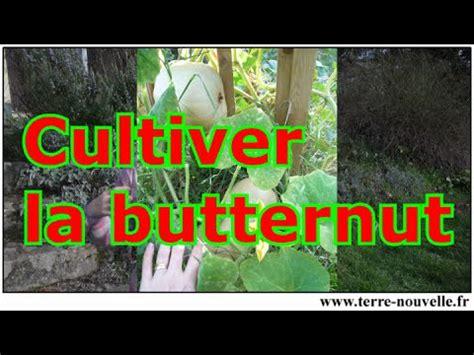 comment cultiver la courge butternut