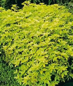 Arbuste À Feuillage Persistant : c 39 est le moment de planter les arbustes persistants ~ Melissatoandfro.com Idées de Décoration