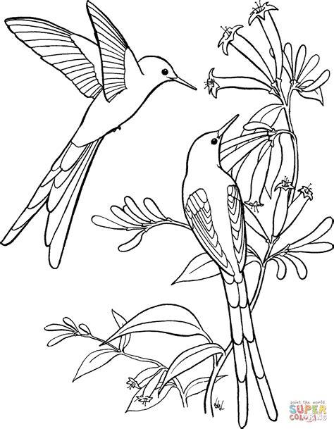 Langstaart Sylph Kolibrie Kleurplaat Gratis Kleurplaten