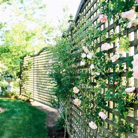 lattice fence with vines do you feel a little claustrophobic at the thought of fencing your yard try lattice its an
