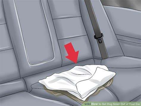 3 Ways To Get Dog Smell Out Of Your Car Clean Dirty Carpet Edges What Is Commercial Grade Academy Awards Red Kansas City Mo Ohio Frey Hirst Carpets How Do You Patch Up Dress Store Mandeville