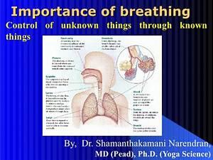 Importance Of Breathing Pranayama Ppt