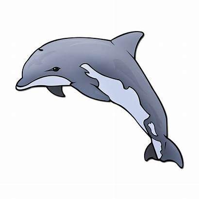 Clipart Dolphin Maui Transparent Webstockreview Picturae Database