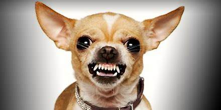 youre  putting  muzzle   dog   vet