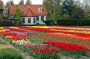 1001 conseils et modeles pour creer une parterre de fleurs for Tapis chambre bébé avec jardin de fleurs à couper