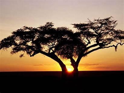 Safari Wallpapers Africa Sunrise Nature Wallpapercave