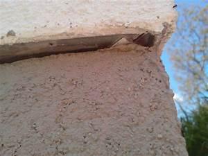 Ameisen In Der Wand : ameisen in der fuge der boden fassade bauforum auf ~ Frokenaadalensverden.com Haus und Dekorationen