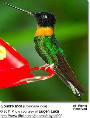 hummingbird diet feeding foraging beauty of birds
