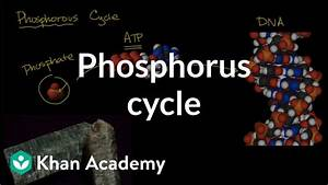 Phosphorous Cycle