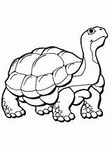 Tortoise Coloring Pages Supercoloring Tattoo sketch template