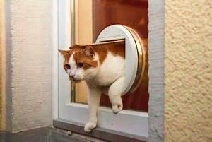 Katzenklappe Für Fenster : katzenklappe zugang f r vierbeiner und f r einbrecher ~ Eleganceandgraceweddings.com Haus und Dekorationen