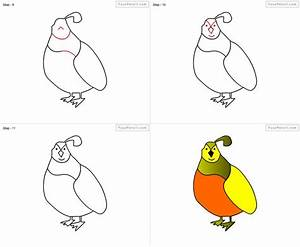 How To Draw Quail For Kids Step By Step Drawing Tutorial