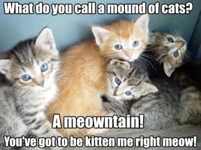cat jokes for cat mound really corny jokes